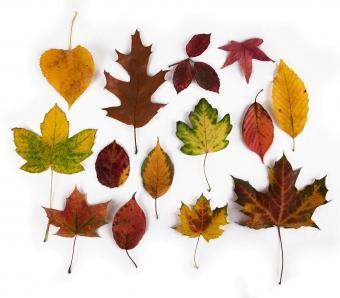 https://cf.ltkcdn.net/garden/images/slide/249579-850x744-6-tree-identification.jpg