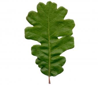 https://cf.ltkcdn.net/garden/images/slide/249580-850x744-7-tree-identification.jpg