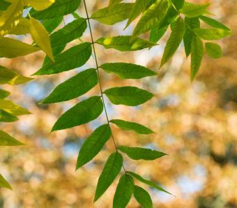 https://cf.ltkcdn.net/garden/images/slide/249581-850x744-8-tree-identification.jpg