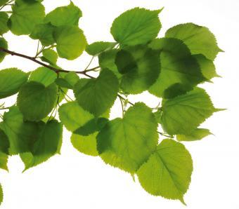 https://cf.ltkcdn.net/garden/images/slide/249583-850x744-10-tree-identification.jpg