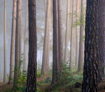 https://cf.ltkcdn.net/garden/images/slide/249587-850x744-15-tree-identification.jpg
