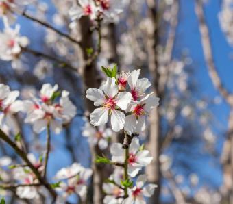https://cf.ltkcdn.net/garden/images/slide/249589-850x744-17-tree-identification.jpg