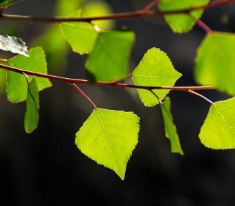 https://cf.ltkcdn.net/garden/images/slide/249591-850x744-11-tree-identification.jpg