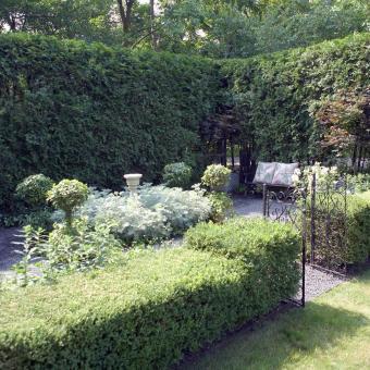 Corner of garden with arborvitae hedge