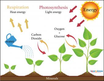 four factors for plant growth