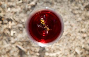 A wasp in a drink