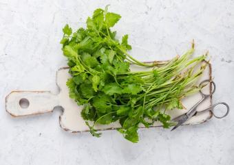 organic cilantro cuttings
