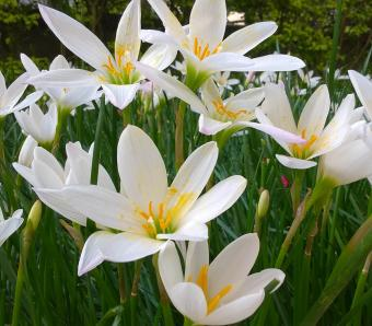 https://cf.ltkcdn.net/garden/images/slide/258181-850x744-3-bellingrath-gardens-alabama.jpg