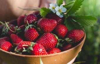 Person picking fresh strawberries