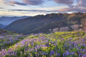Meadows of Heliotrope Ridge North Cascades