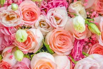 June Birth Flowers: Beautiful Meanings of Rose & Honeysuckle