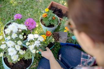 Young woman planting flowers in pot plants
