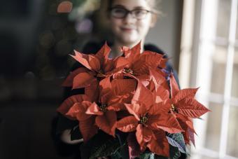 Girl holding christmas poinsettia in living room