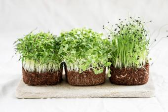 How to Grow Microgreens: Guide to Effortless Superfood