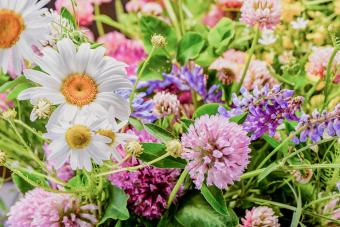 April Birth Flowers: Significance of the Daisy and Sweet Pea