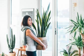 12 Low-Light Indoor Plants to Brighten Up Your Space