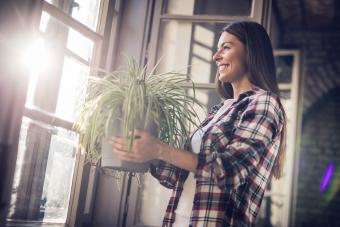 Young happy woman with spider plant by the window