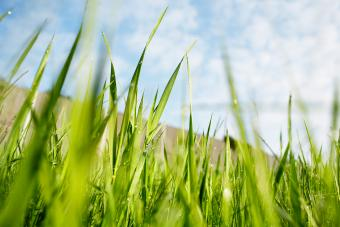 Your Guide to Bermuda Grass: Knowing the Ins and Outs
