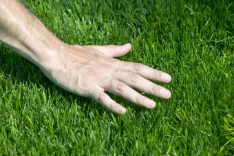 Hand hovering over fresh cut grass