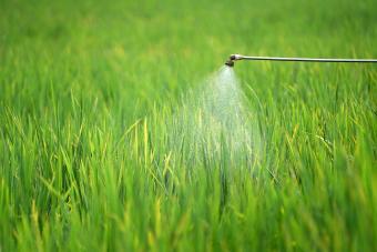Fungicide Sprayed Onto A Grass Field