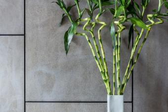 https://cf.ltkcdn.net/garden/images/slide/273250-850x566-lucky-bamboo.jpg