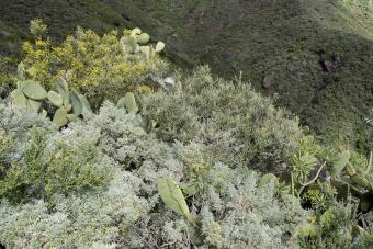 Artemisia plants and other wild flowers