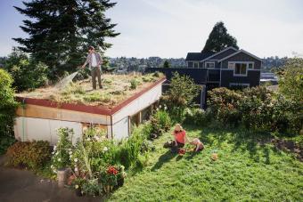man watering green roof
