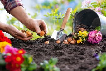 How to Plant Fall Bulbs