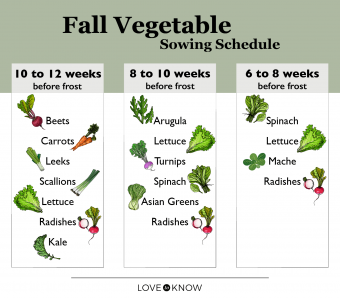 Fall Vegetable Planting Schedule