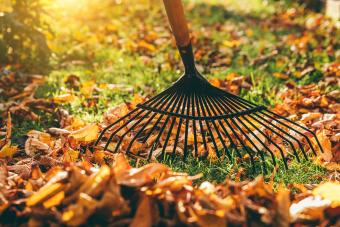 Fall Garden Cleanup for a Smart Start (Includes Checklist)
