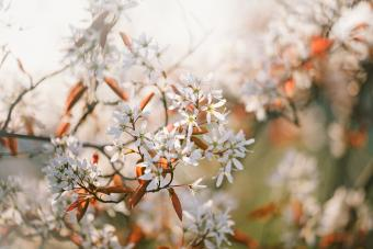 9 Gorgeous Shrubs to Plant in Fall