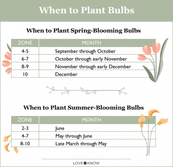 When to lant Bulbs Infographic