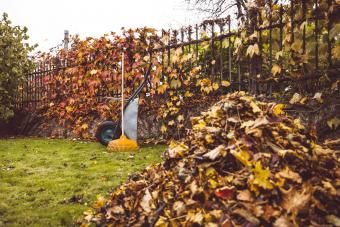 A pile of golden autumn leaves in front and a wheelbarrow