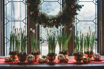 Paperwhite bulbs grow in bowls on a window ledge