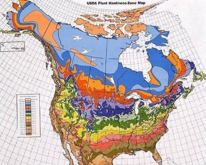 what is a hardiness zone