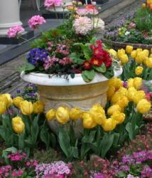 flowering bulbs in a container