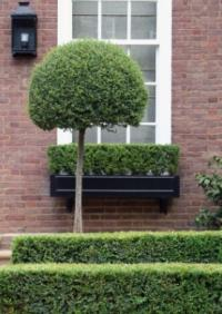 window garden hedge