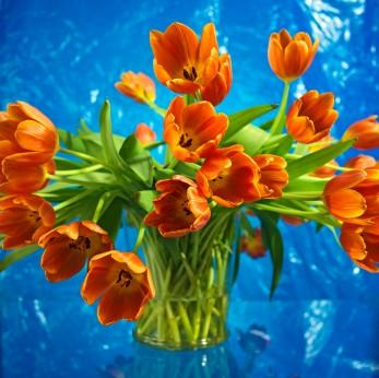 Bouquet_of_Tulips_(347_x_346).jpg