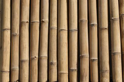 How To Propagate Timber Bamboo Lovetoknow