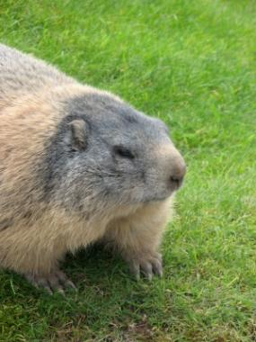 how to keep groundhogs out of my garden. How To Keep Groundhogs Out Of My Garden