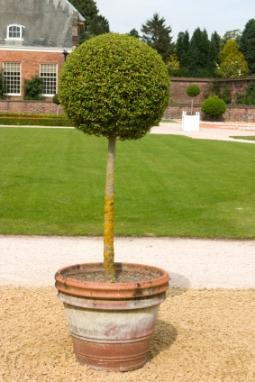 Topiary_Tree.jpg