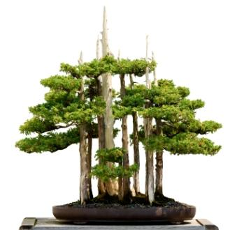 Epic_Bonsai.jpg