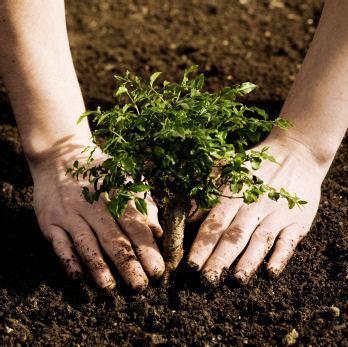 Soil_building.jpg