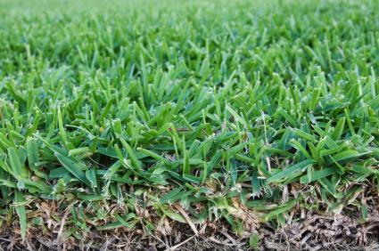 Grass_Roots.jpg