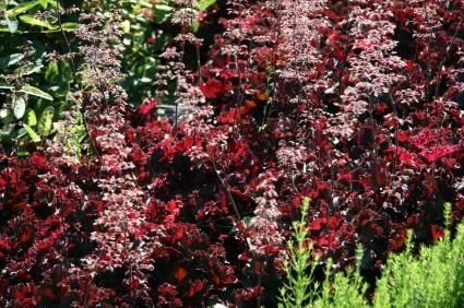 Shade Loving Coral Bells and Other Plants