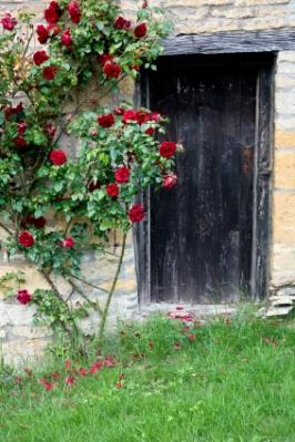 Black_Door_Red_Roses.jpg