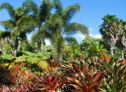 How To Protect Tropical Plants In The Winter Lovetoknow