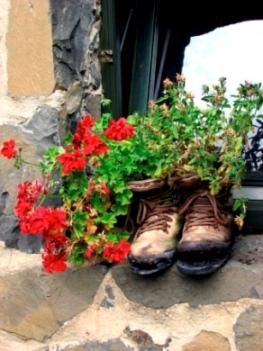 Ivy Geraniums Planted in Boot