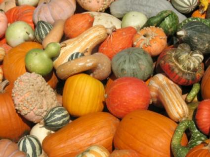 Beautiful gourds and fall squash