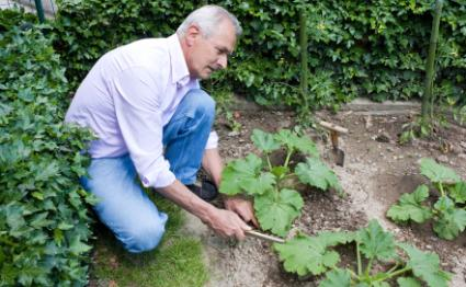 man working in his vegetable garden